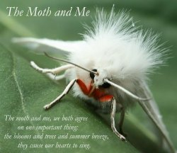 The Moth and Me